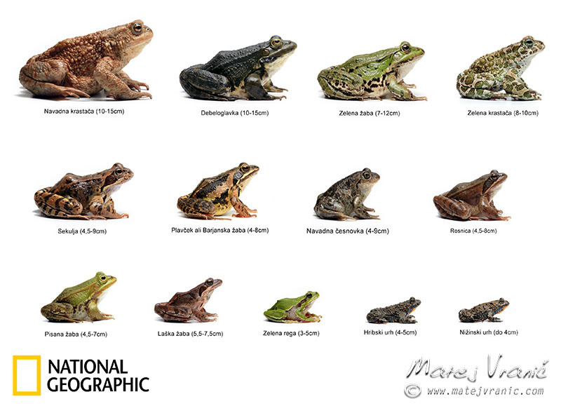 NATIONAL GEOGRAPHIC ALL SLOVENIAN FROGS